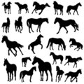 Big vector collection of horse silhouettes Stock Photography