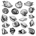 Big vector collection of sketched seashells isolated on white background. Hand-drawn sea animals set. Royalty Free Stock Photo