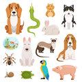 Big vector set of different domestic animals. Cats, dogs, hamster and other pets in cartoon style Royalty Free Stock Photo