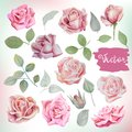 Big watercolor roses and leaves set for bouquets, wreaths, weddi