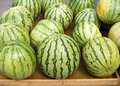 Big watermelon market display in a row Royalty Free Stock Images