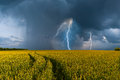Big wheat field and thunderstorm Stock Photos