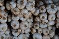 Big white garlic set in thailand Royalty Free Stock Photo