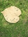 Big yellow leaf Royalty Free Stock Photo