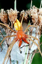 Big yellow and orange spider Stock Images