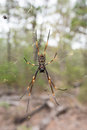 Big yellow spider in the wild on a net Royalty Free Stock Photo