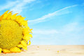 Big yellow sunflower on wooden surface Royalty Free Stock Photo
