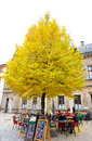 Big yellow tree in Prague Castle area. The tree locates near a coffee shop inside castle wall. Royalty Free Stock Photo