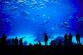 Biggest aquarium in the world. Atlanta, Georgia. Royalty Free Stock Photo