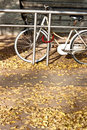 Bike in autumn parking on the dried leaves carpet Stock Photos