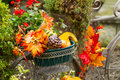 Bike basket filled with autumn objects closeup horizontal photo of old stationary leaves pumpkins and other various green Royalty Free Stock Photos