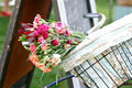 Bike basket filled with flowers Royalty Free Stock Photography