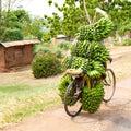 Kolo bez řidič? kolo naložený nahoru mnoho svazky z zelený zralý vaření banány plantejny,