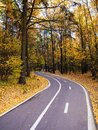 Bike path in the autumn forest Royalty Free Stock Photo