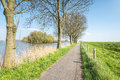 Bike path beside a small natural pond in springtime narrow between trees along the water and dike with fence Royalty Free Stock Photos