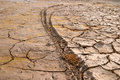 Bike tire print on dry mud cracks Stock Photos