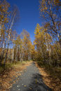 Bike Trail in Minnesota Royalty Free Stock Photography