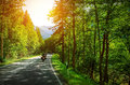 Biker on mountainous road in sunset light motorcyclist highway drive motorbike along alps europe trip beautiful forest active Stock Image