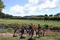 Bikes in vineyard Stock Photo