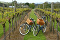 Bikes in vineyard Royalty Free Stock Photo