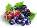 Bilberries, blueberries, raspberries and blackberries ,isolated Royalty Free Stock Photo