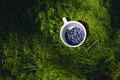 Bilberries In the Cup Royalty Free Stock Photo