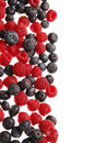 Bilberries and raspberries Royalty Free Stock Photo