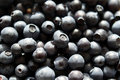 Bilberry Background Royalty Free Stock Photo