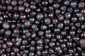 Bilberry background many closeup ripe Stock Photography