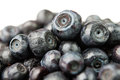 Bilberry heap Stock Photo