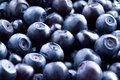 Bilberry macro. Food background Stock Photography
