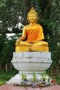 Bild av buddha under trädet Royaltyfri Fotografi