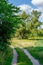 Bild av en grusväg till och med lövskogen Arkivbilder