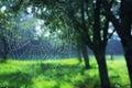 Bilder av spindelrengöringsdukar på våren under morgonen gräsplanblått färgar tystnad och fred Arkivbild
