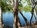 Billabong, Cape York Peninsula Royalty Free Stock Photo