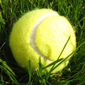 Bille de tennis sur l'herbe Photo stock