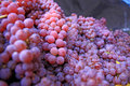 Bin of Red and Green Grapes Royalty Free Stock Photo