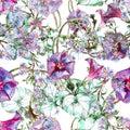 Bindweed, blue flower, watercolor, pattern seamless Royalty Free Stock Photo