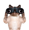 Binoculars cat searching looking and observing with care isolated on white Royalty Free Stock Photos