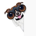 Binoculars  dog Royalty Free Stock Photo