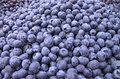 Bins of Blue Berries Stock Image