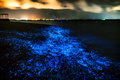 Bio luminescence illumination of plankton at maldives many bri Royalty Free Stock Photography