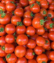 Bio Tomatoes Royalty Free Stock Image