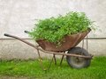 Bio wheelbarrow Stock Photo
