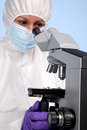 Biochemist using a stereo microscope Royalty Free Stock Images