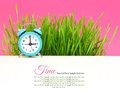 Biological clock concept with grass and pink background Stock Image