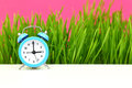 Biological clock concept with grass and pink background Royalty Free Stock Image