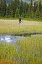 Biologist exploring a bog Royalty Free Stock Photography