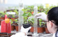 Biologist pouring liquid into flower pot with sprout Royalty Free Stock Photo
