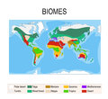 Biomes. Terrestrial ecosystem Royalty Free Stock Photo
